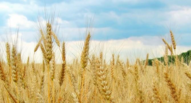 Slide #2 Il grano della Maremma laziale